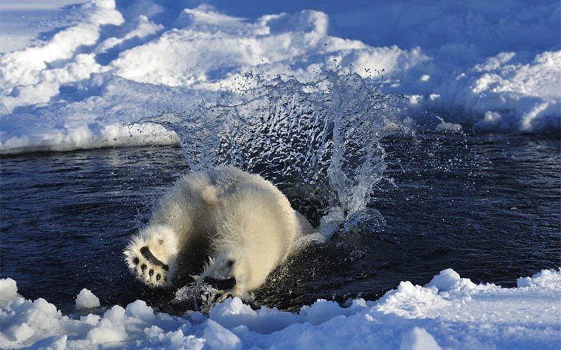 experiencias-next-destinium-1-osos-polares