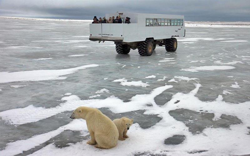 experiencias-next-destinium-2-osos-polares