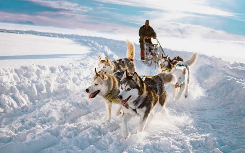 Trineo con perros husky por la nieve