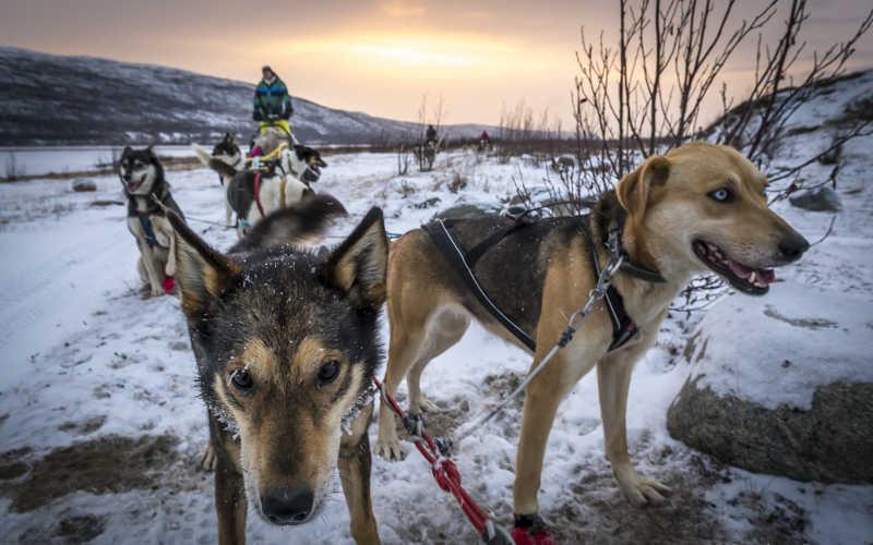safari de perros husky en ruka laponia