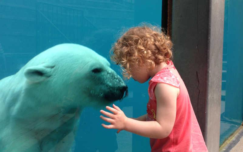zoo quebec osos polares