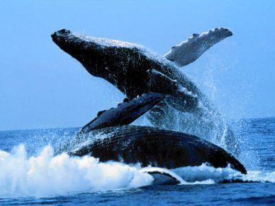 ver ballenas argentina