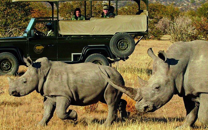 safaris-etosha-namibia