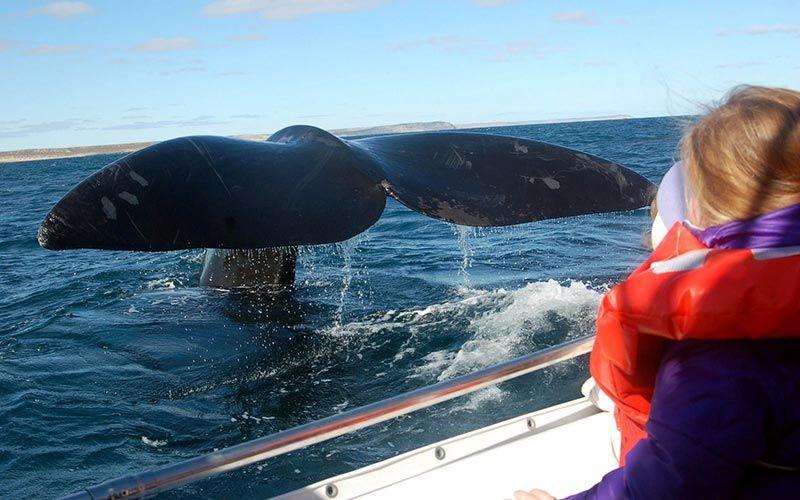 ver-ballenas-peninsula-valdes-viaje-argentina