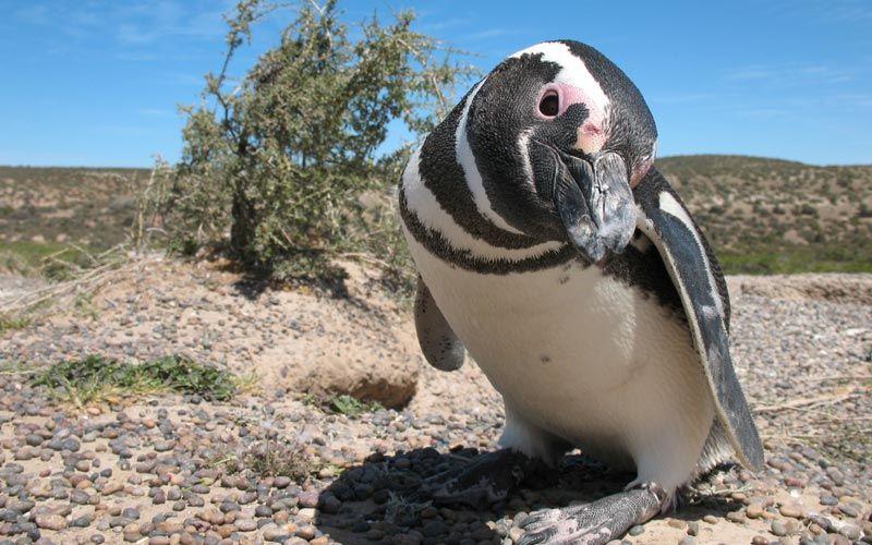 ver-pinguinos-peninsula-valdes-viaje-argentina