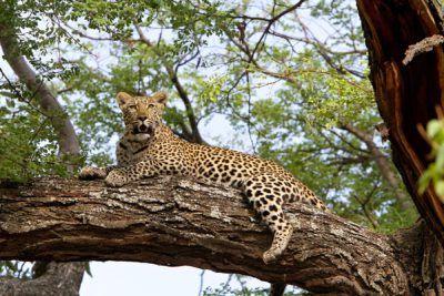 viajes a sudafrica kruger safari