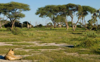 La Reserva Natural de Moremi en el Delta de Okavango, Botswana