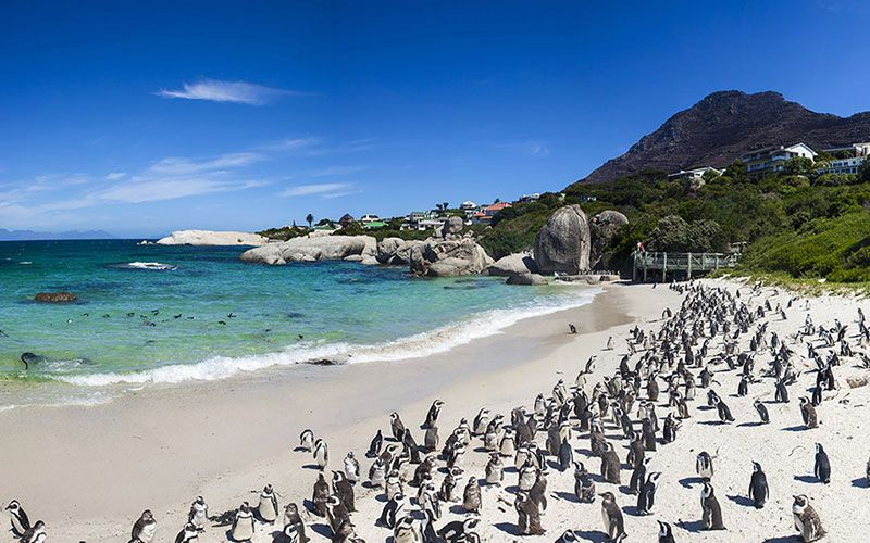 playa-boulders-beach-pinguins