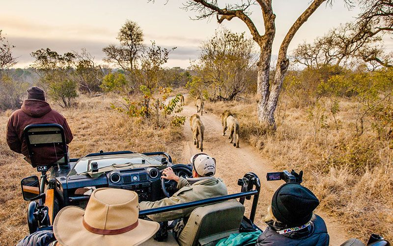 safari-sabi-sabi