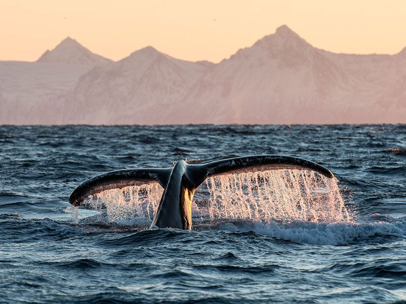 Whale Watching Andenes in Norway