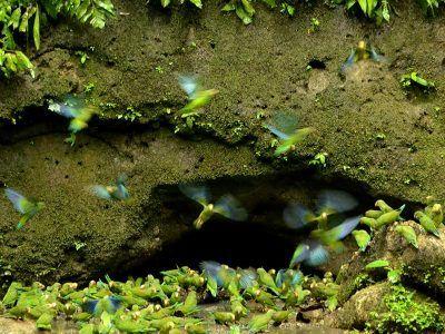 viajes ecuador amazonia aves