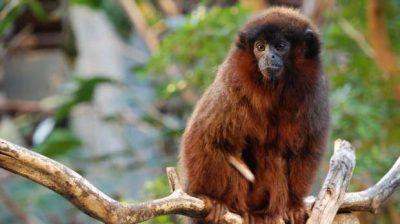 viajes ecuador amazonia