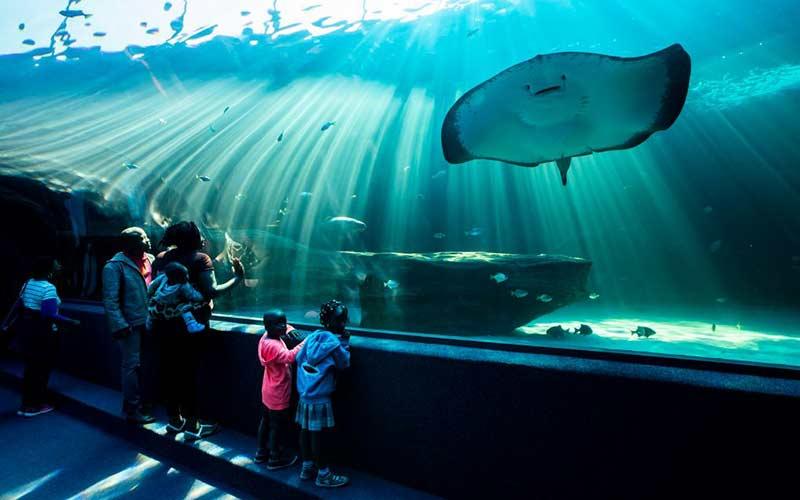 acuario-cape-town-viaje-sudafrica-con-ninos