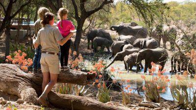 sudafrica-safari-con-ninos