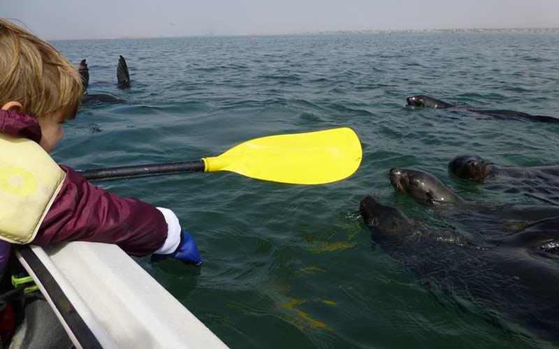 viaje-sudafrica-ninos-kayak-con-focas