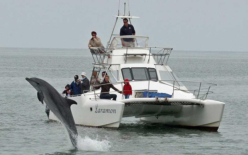 ver-delfines-swakopmund-namibia