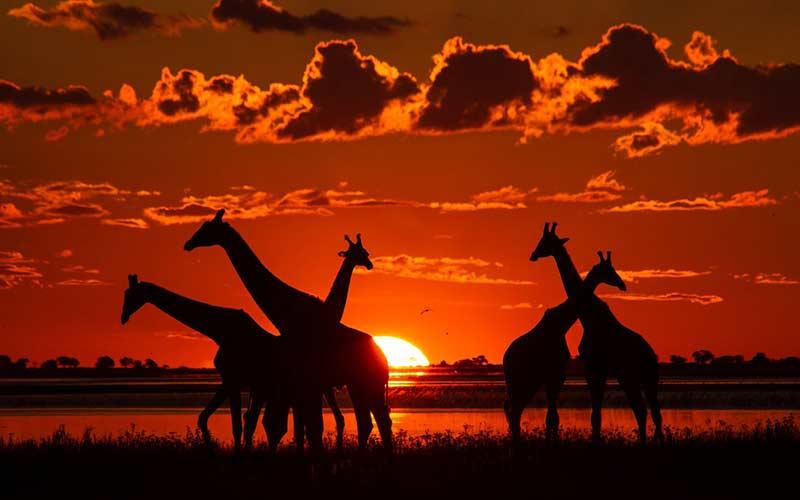 Parque Nacional de Chobe en Botswana