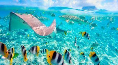 snorkling-maldivas-actividades-viaje-novios