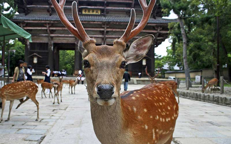 visitar-nara-parque-viaje-novios-japon