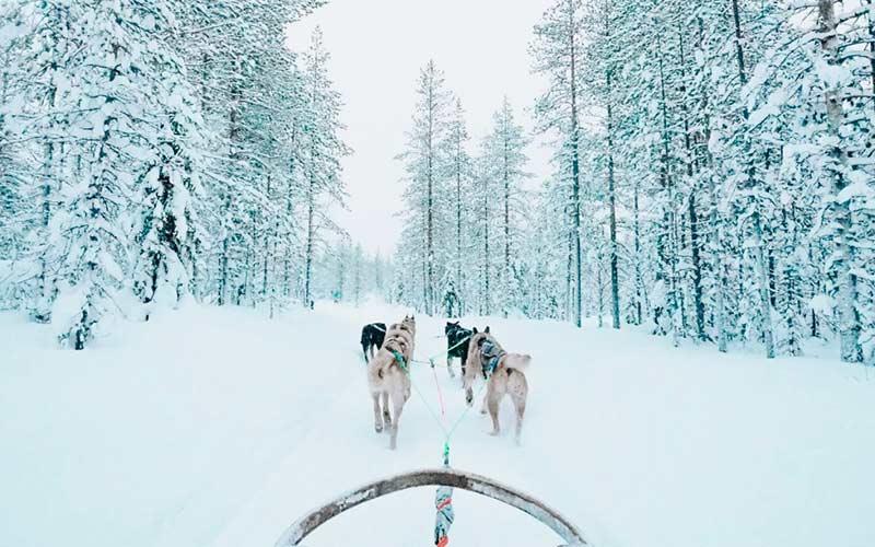 mejor-safari-de-huskies-rovaniemi-viaje-laponia