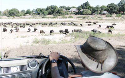 viajes-sudafrica-safaris-kruger-lujo