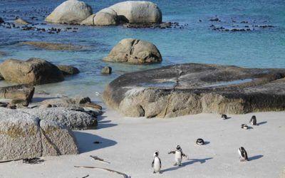 ver-pinguinos-sudafrica-viaje.