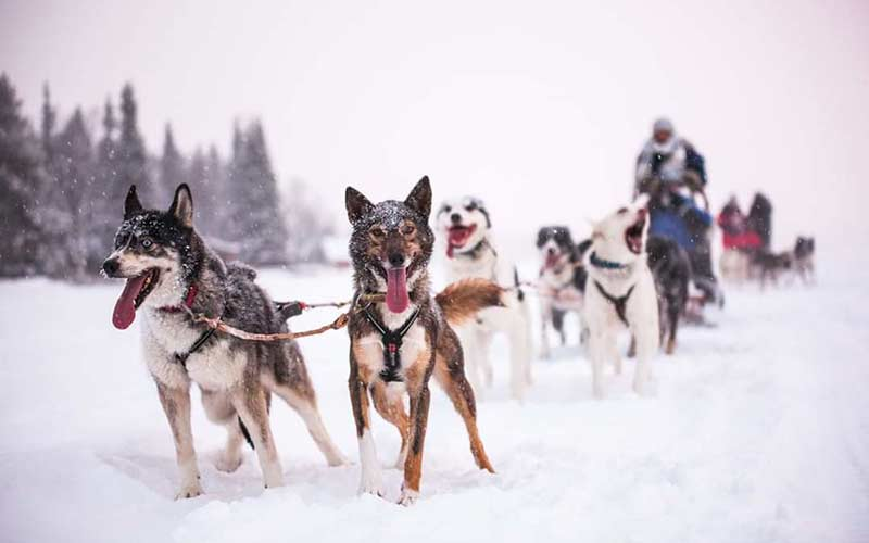 husky-tours-laponia-suecia-viajes-a-medida-exclusivos