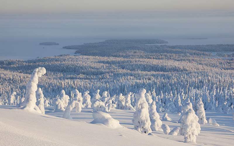 Los mejores parques nacionales en un viaje a Laponia