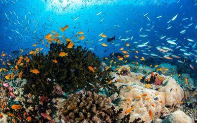 Los 10 mejores resorts de snorkeling en Maldivas
