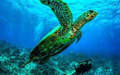 mejores-resorts-maldivas-snorkling-dusit-thani